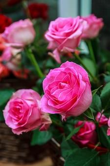 물에 흠뻑 젖은 밝은 색의 꽃의 분홍 장미.