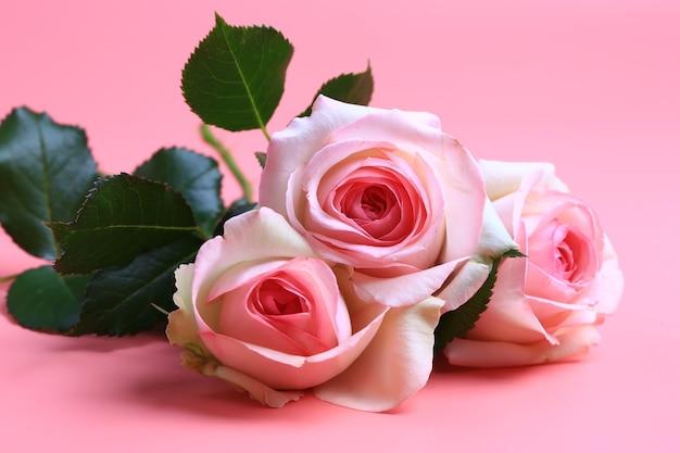 Розовая роза на розовом фоне. креативный минималистичный макет
