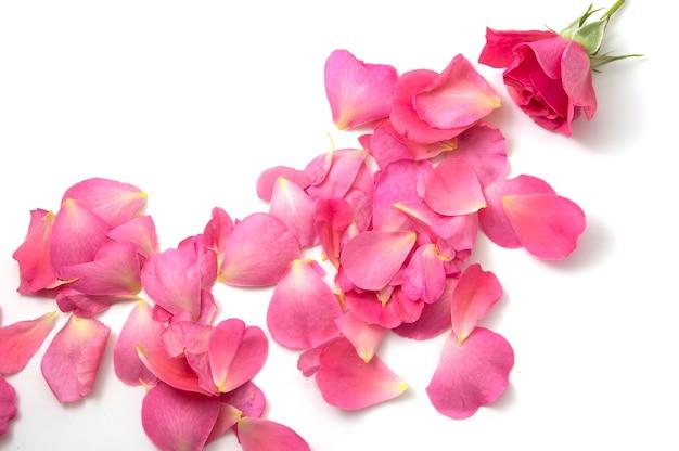 Розовая роза на белом фоне с зелеными листьями