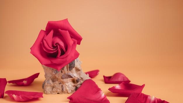 시멘트 바위에 핑크 로즈. 사랑과 발렌타인 데이의 꽃 상징