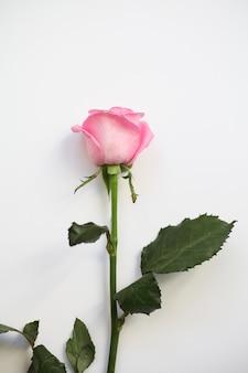 白地にピンクのバラ。上面図