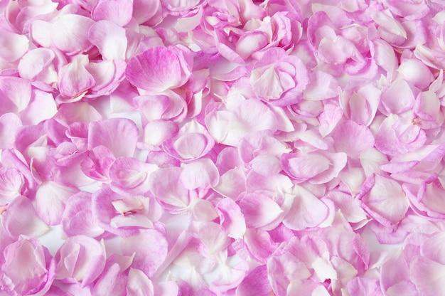 Розовые лепестки роз фон, крупным планом Premium Фотографии