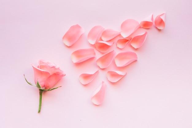 Розовые лепестки роз в аранжировке
