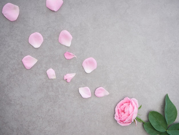 Розовые лепестки роз на сером фоне
