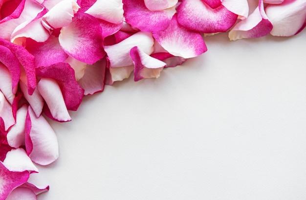 白地にピンクのバラの花びら