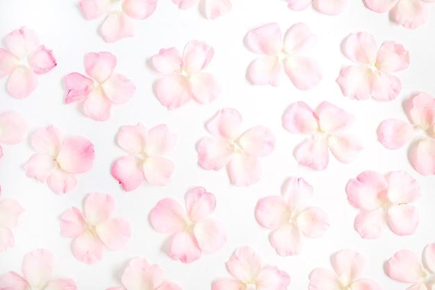 白地にピンクのバラの花びらのパターン。フラットレイ、トップビュー
