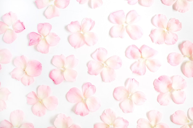 Pink rose petals pattern on white background. flat lay, top view