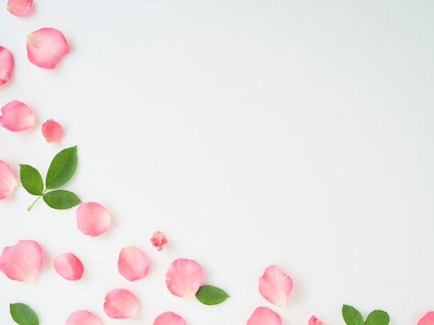Pink rose petals with leaves on white background