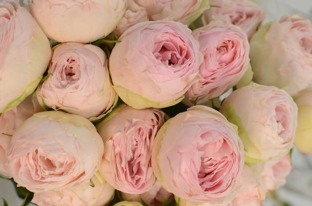 Pink rose pomponella summer spray on white background