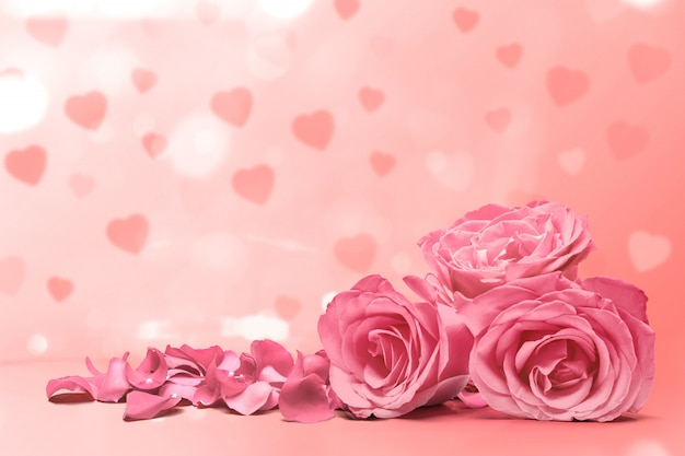 Pink rose and rose petals on a pink background