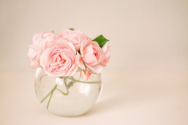 Pink rose in vase on white background