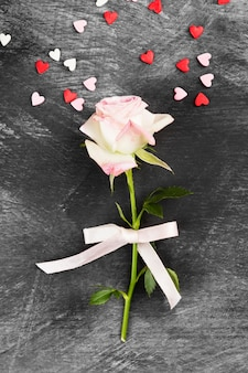 Pink rose with white ribbon on a dark background. top view