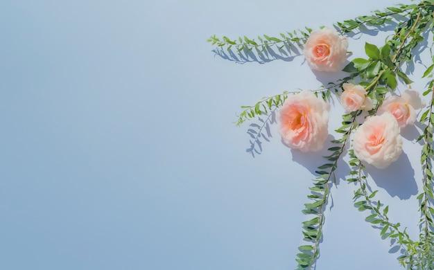 핑크 장미와 첨탑 잎