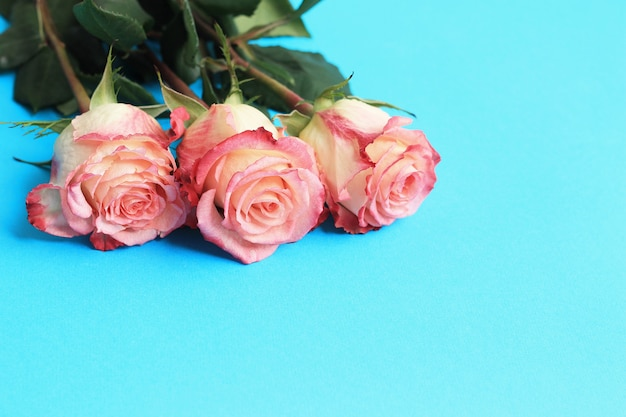 Pink roses on blue background board