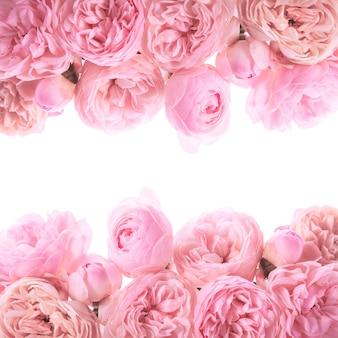 Дизайн границы розовые розы, изолированные на белом фоне