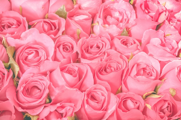 Pink roses bouquet background