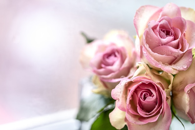 Pink roses bouquet with free space for text. copy space