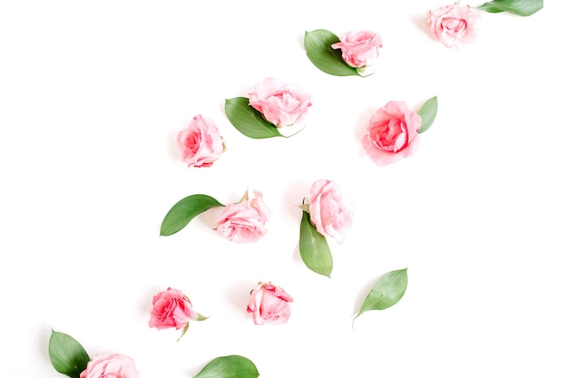 ピンクのバラのつぼみが分離されました