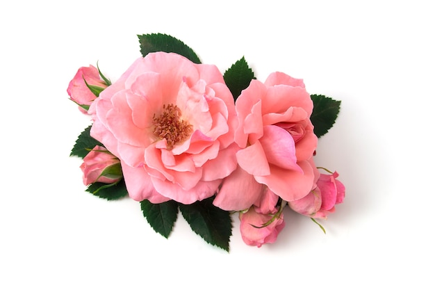 Букет розовых роз, изолированные на белом фоне
