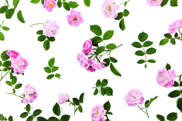 Pink roses composition for background