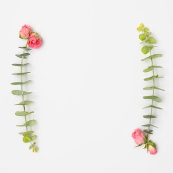 Pink roses and eucalyptus leaves twig over white surface