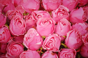 Pink roses flower  for background.