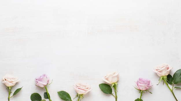 Pink roses on gray background with copy space. flat lay, top view