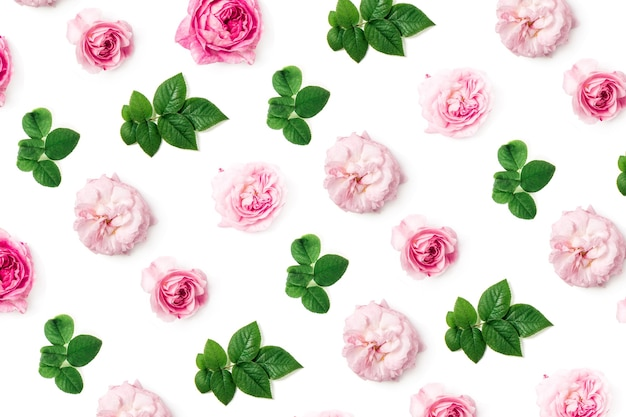 Pink roses and green leaves pattern on white background