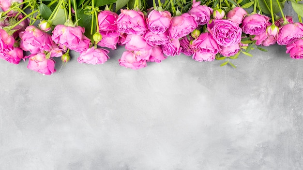 Pink roses on grey background with copy space.