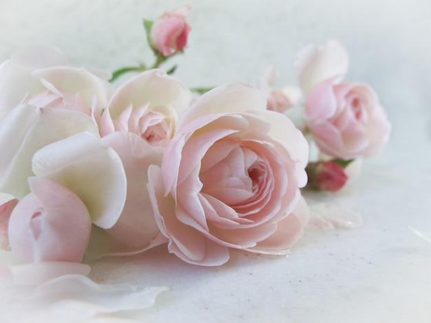 背景のグリーティングカードやの招待状に最適な白い背景に分離されたピンクのバラ