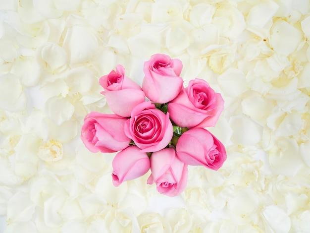 Розовые розы на белом фоне