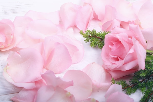 Pink roses on a light background