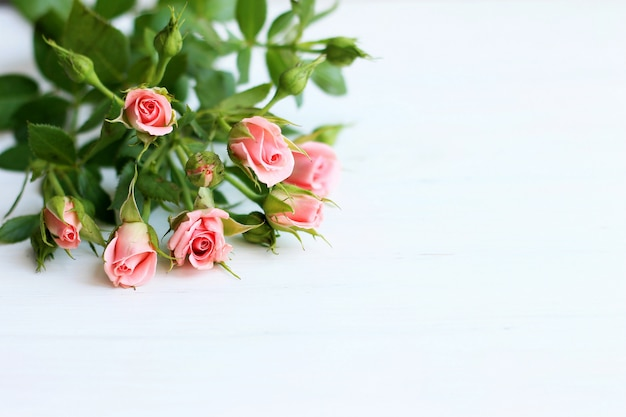 Pink roses on a light background,