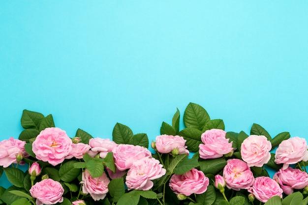 파란색 배경에 이미지 하단에 늘어선 핑크 장미. 평평한 평면도, 평면도
