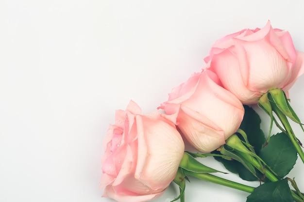 Розовые розы на нежном светлом фоне