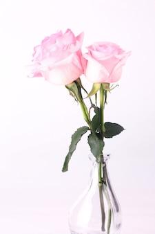 Розовые розы на светлом фоне
