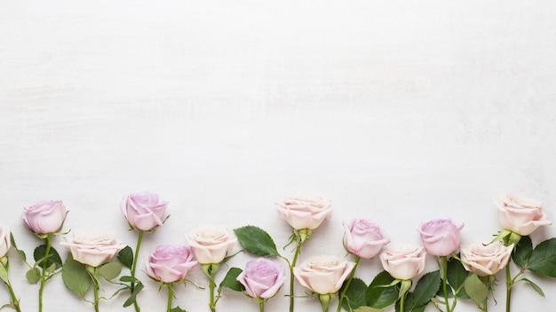 コピースペースと灰色の背景にピンクのバラ。フラットレイ、上面図