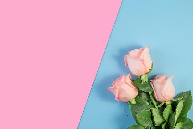 Розовые розы на пастельно-розовом и синем фоне. день рождения, матери, валентинки, женщины, концепция дня свадьбы. весенний сезон цветения. минимальная праздничная композиция. копировать пространство