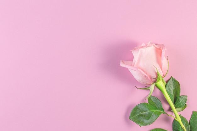 パステルピンクの背景にピンクのバラ。誕生日、母、バレンタイン、女性、結婚式の日のコンセプト