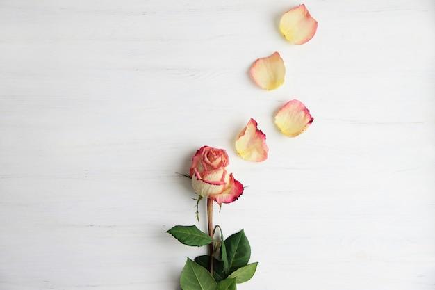Pink roses, rose petals on wooden background