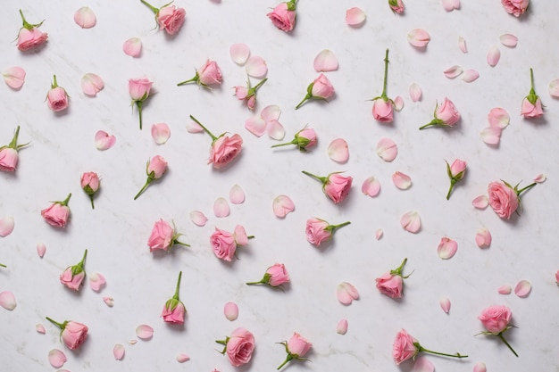 Pink roses on a white background. top view