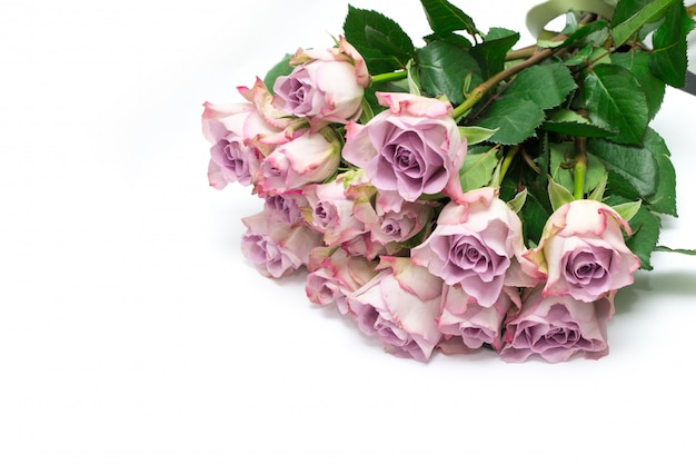 Pink roses on white background. valentine's background. pattern of flowers.