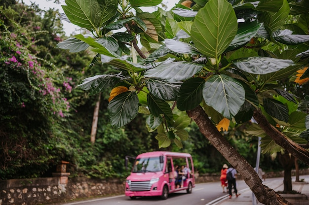 Pink shuttle bass for tourists in tropical asian nature park.