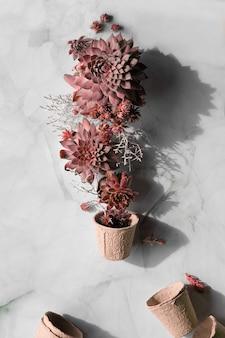 Розовые тона различные суккуленты sempervivum и горшки для рассады для выращивания отдельных детских растений, плоская планировка