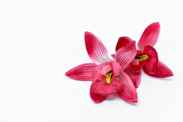 흰색 배경에 분홍색 열 대 꽃 난초 frangipani 스파 개념을 조롱