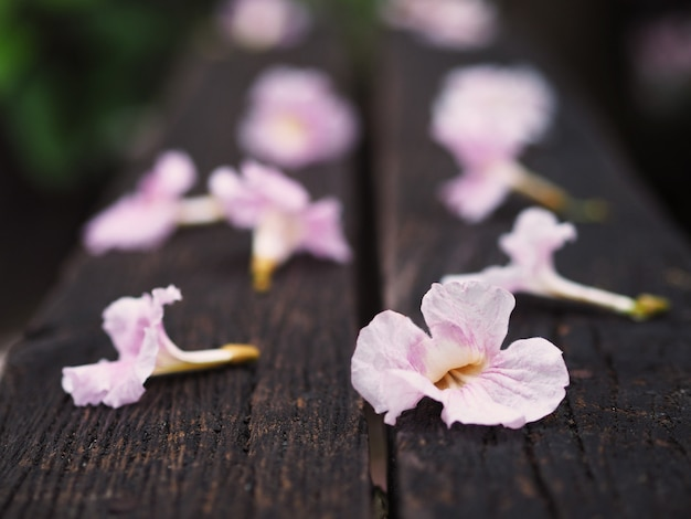 Pink trumpet flowers falling down on wooden bench
