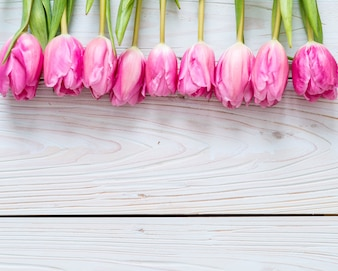 Pink tulip flower on wood background