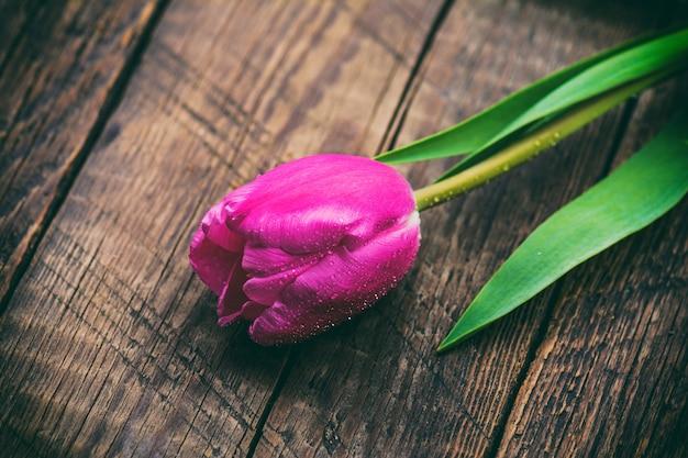 Розовый тюльпан на деревянных фоне