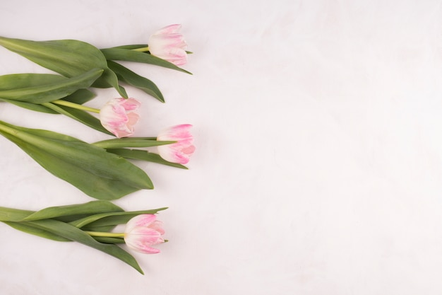 Pink tulip flowers on white table