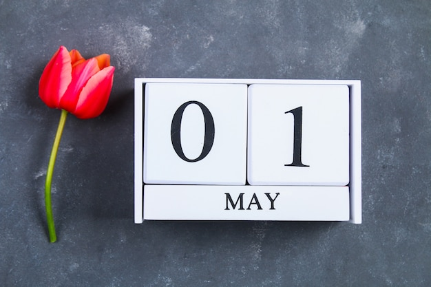 Pink tulip on gray concrete background and calendar. 1st of may. day of spring and labor.